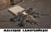 mouse_dead.jpg