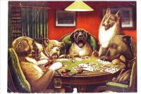 6-Animal-acting-human-Dogs-playing-cards-facetious-humor-pets.jpg
