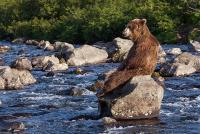 Медведи Камчатки  001.jpg