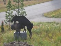 1197380669_moose5.jpg