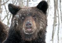 Медведь  007.jpg